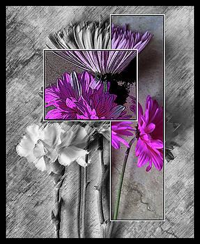 Pink White No. 2 by Dw Johnson