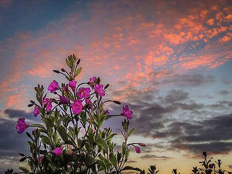 Pink Wildflowers at Sunset by James Truett