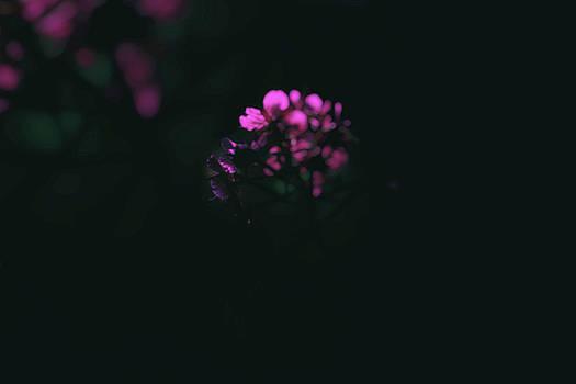 Pink wildflowers by Frances Lewis