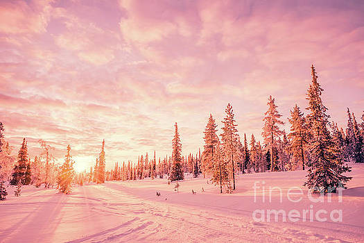 Delphimages Photo Creations - Pink winter