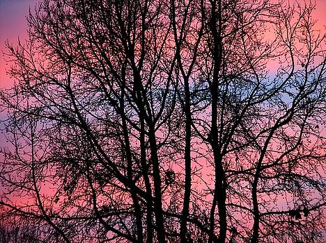 Pinko by Chris Dunn