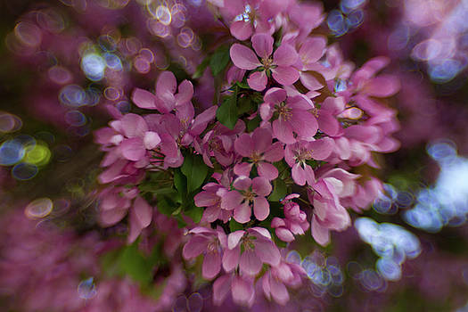 Pinkolicious Bokeh by Sharon Wilkinson