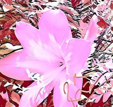 Rizwana Mundewadi - Pinky Pink Beauty