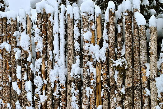 Pinon Fence by Wendy Girard