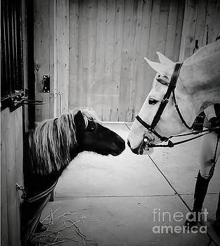 Life With Horses - Pint Size Love