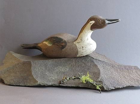 Pintail # 2 by Bruce Peterson