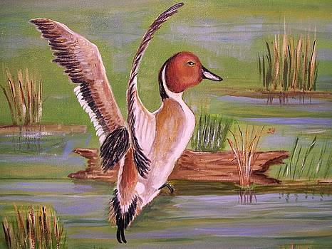 Pintail Duck II by Belinda Lawson