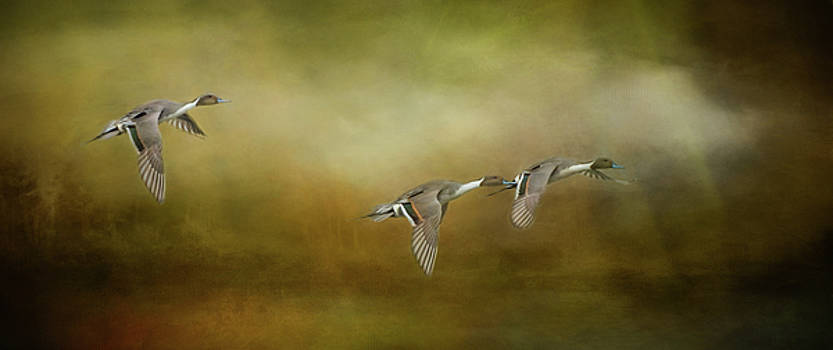 Pintail Ducks Flying in Formation by Marilyn Wilson