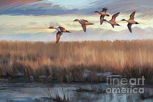 Pintail Fly By by Rob Corsetti