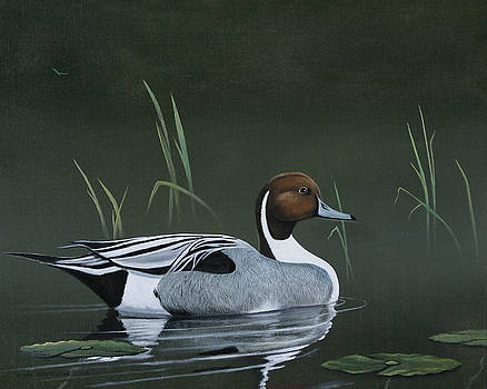 Pintail Portrait by Don Griffiths