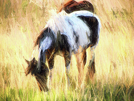 Pinto Grazing by Shannon Story