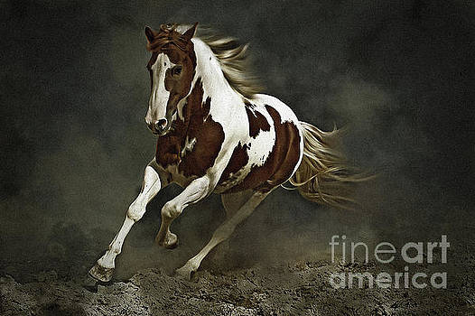 Pinto Horse in Motion by Dimitar Hristov