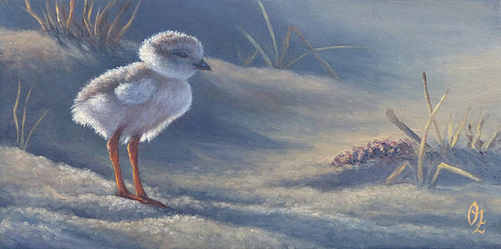 Piping Plover chick by Oksana Zotkina