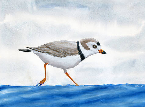 Piping Plover by Julie Selan