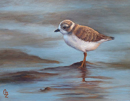 Piping Plover Juvenile by Oksana Zotkina