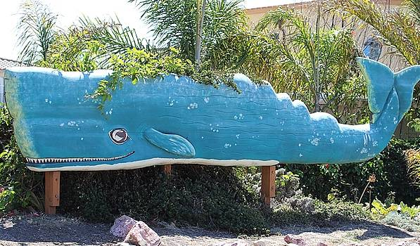Gary Canant - Pismo Happy Whale