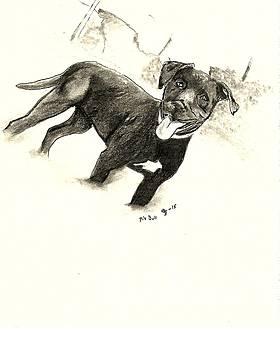 Pit Bull 3 by Crystal Webb