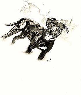 Pit Bull 4 by Crystal Webb