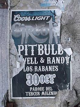 Pitbull by Anna Villarreal Garbis