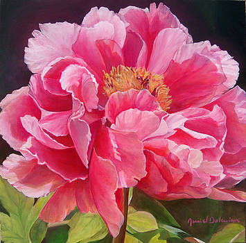 Pivoine rose by Muriel Dolemieux