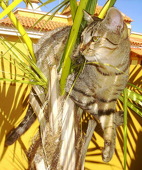 Pixel - Funny Palm Cat by Robert Schaelike