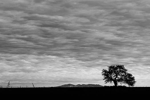 Plains of Argentina by Nathan Larson