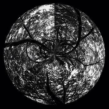 Planeta Algodoeiro by Julian Marques