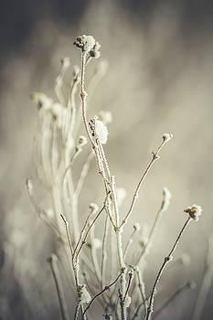 Plant by Cindy Grundsten