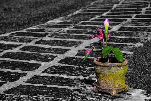 Plant by Stuart Manning