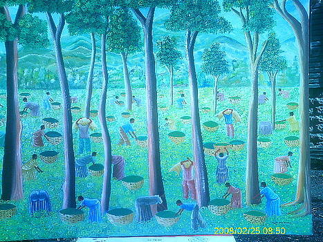 Plantation by Muller Jeanfrancois