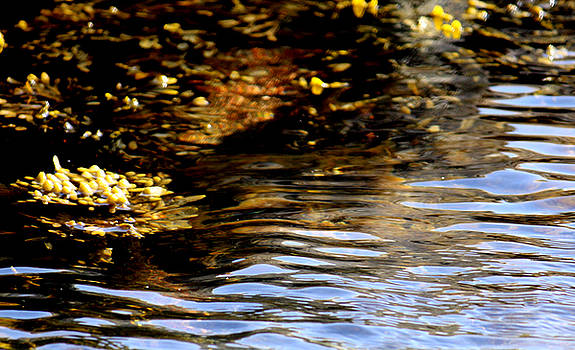 Plants in water by Toon De Zwart
