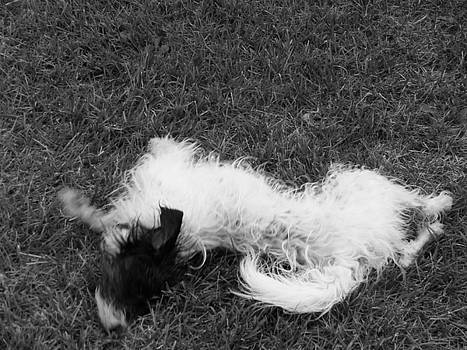 Playful Black N White by Paula Giampola