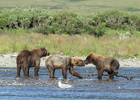 Playful Cubs by Cheryl Strahl