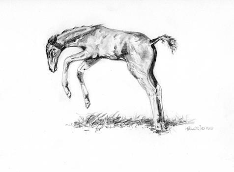 Playful Foal by Heidi Kunkel