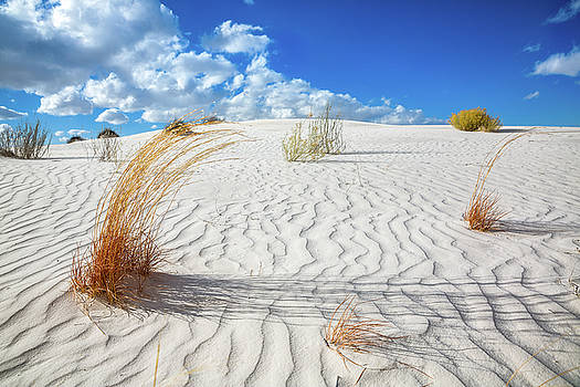 Playground - Colorful Plant Life and Textures at White Sands National Monument in New Mexico by Sean Ramsey