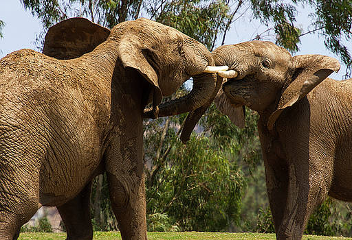 Playing Elephants by Anthony Jones