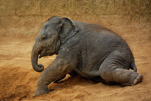 Playing In The Sand by Joachim G Pinkawa
