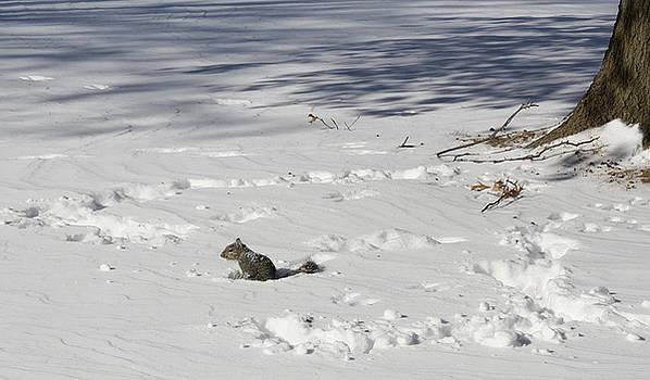 Sherri Williams - Playing in the snow
