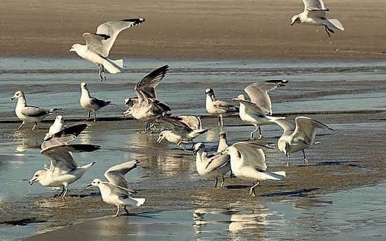 Playtime for Gulls by Rosanne Jordan
