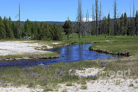 Pleated gentians beside Iron Creek in Black Sand Basin by Louise Heusinkveld