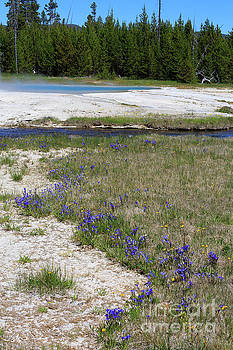 Pleated gentians beside Iron Creek by Louise Heusinkveld