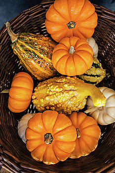 Plenty Of Pumpkins by Evgeniya Lystsova