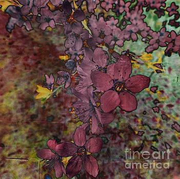 Plum Blossom by LemonArt Photography