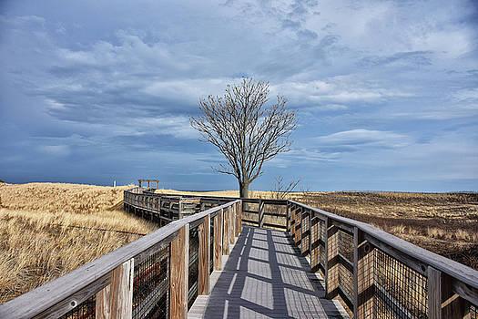 Plum Island Walkway by Tricia Marchlik