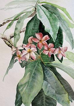 Plumeria by Karen Boudreaux
