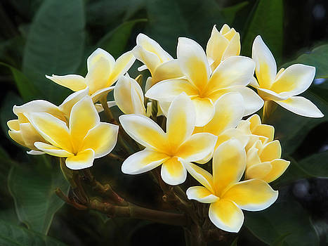 Plumeria Power by Bonnie Follett