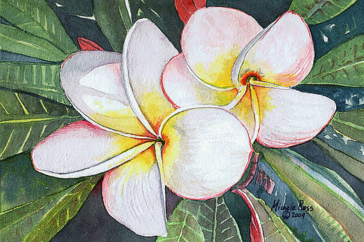 Plumeria Twins by Michele Ross