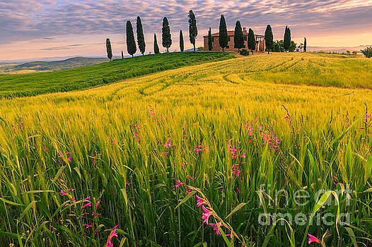 Podere I Cipressini near Pienza by Henk Meijer Photography