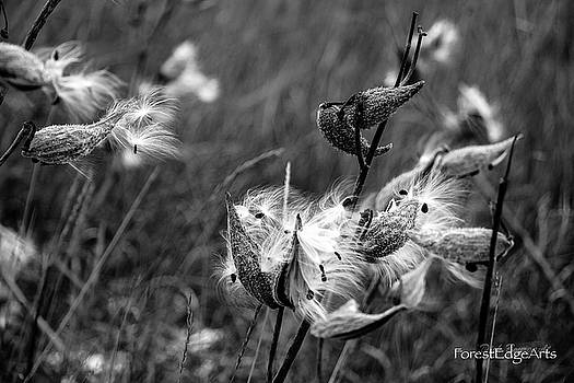 Pods by Dick Bourgault