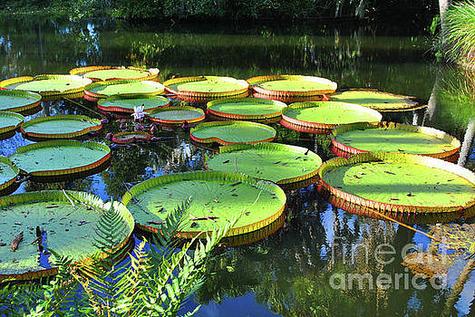 Jost Houk - Pods of the Pond